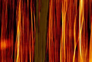 Painting like photo of tree against fiery background