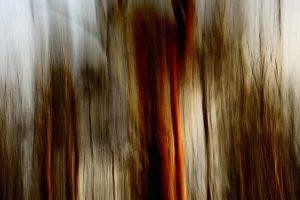 Bark of trees in sunset