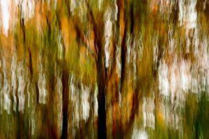 Multi colored trees in autumn