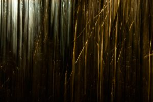 Reeds with different light from left to right
