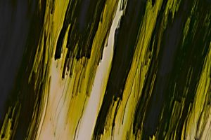 Abstract image of trees