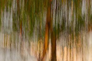 Tree on heather in dusk