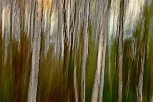 Trees heather in Hilversum