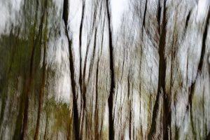Trees heather Hilversum 2