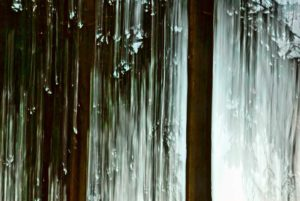 Icy trees in wood