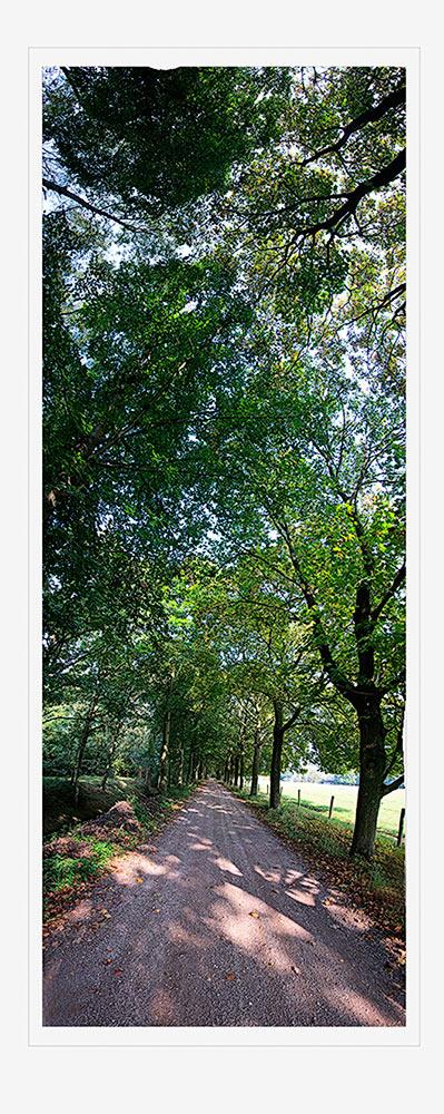 Upwards panorama of wooded lane