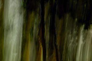Dark trees in wood-gloomy atmosphere