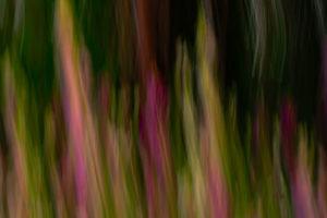Digitalis in blur
