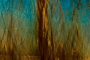 Painterly photo of tree