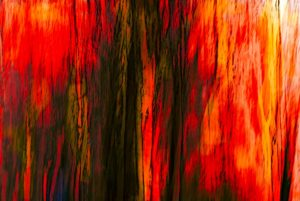 Graphic image in red and brown of row of trees