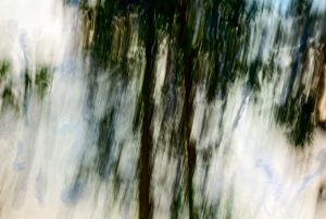 Combination of photo and painting of trees