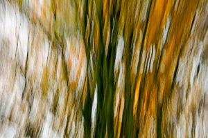 Trees along long lane in autumn