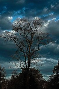 Dramatic tree against clouds