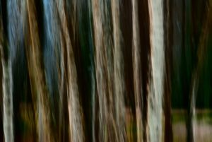 Painterly photo of group of birches