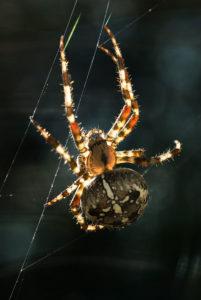 Spider in net against dark background