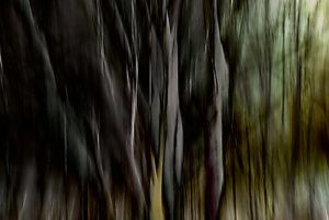 Dark obscure trees