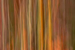 Abstract forest border