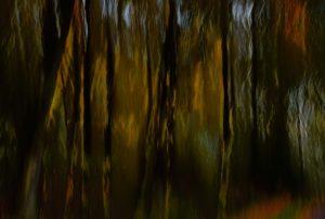 Dark photo of lane in woods