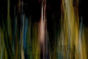 dark-painterly photo of forest