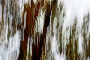 Shivering photo of trees in the wind