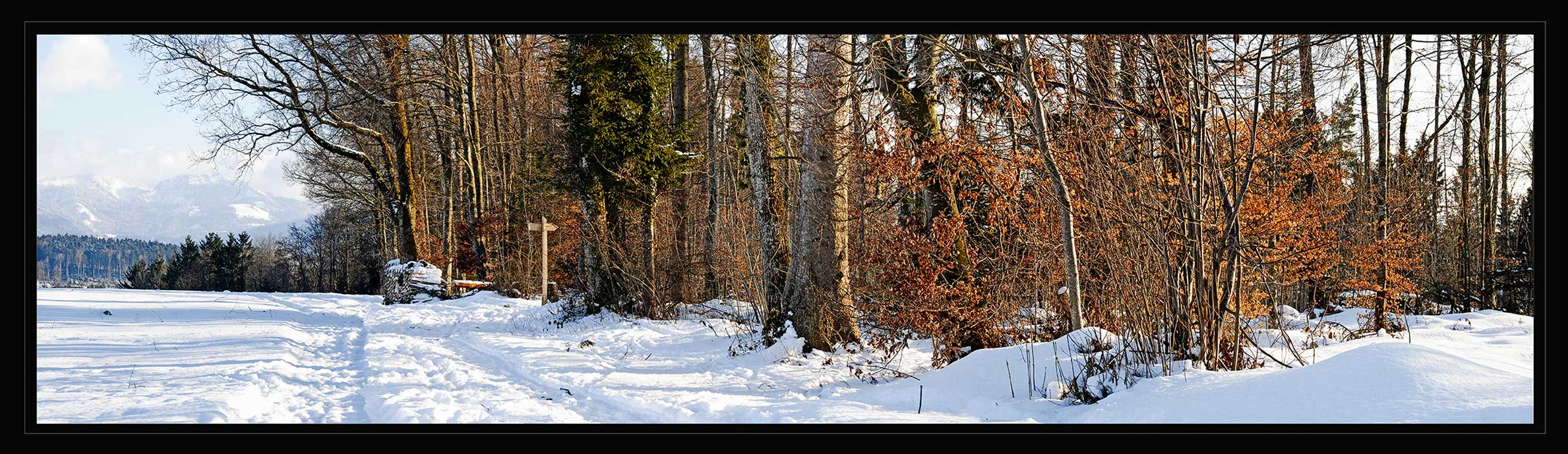 Panorama border of woods