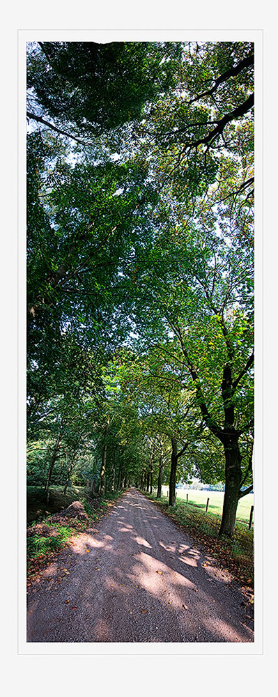 Upwards panorama of wooded lane